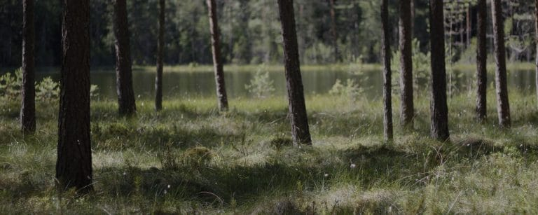 Nordic forest and bogs