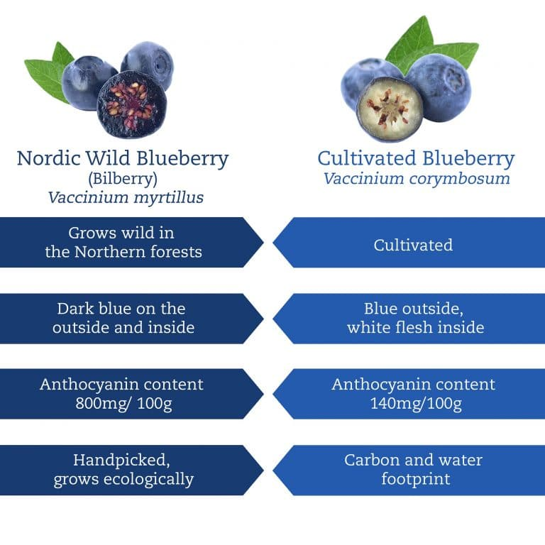 Wild vs cultivated Blueberry